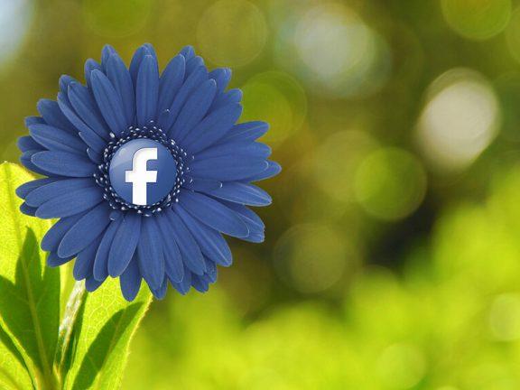 Blauwe bloem met Facebooklogo op groene achtergrond