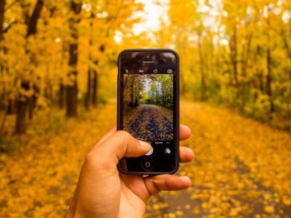 Online marketing - garden industry