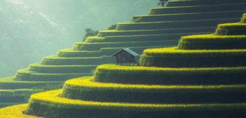 rijstvelden op heuvels en huisje