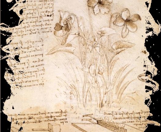 work of Leonardo da Vinci